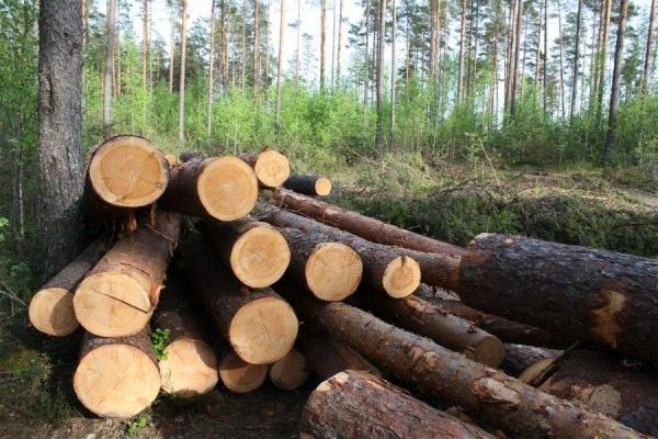 На Поліссі знайшли чоловіка, який незаконно рубав ліс