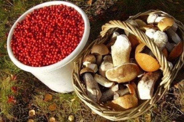 Збирати ягоди в лісах Білорусі жителям Рівненщини можна до 15 листопада