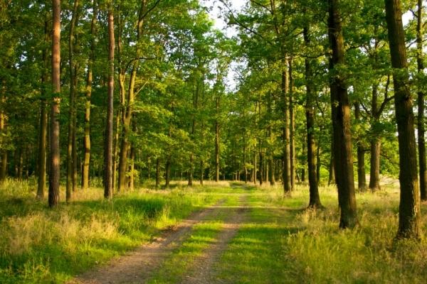 Мешканців Рівненщини запрошують відсвяткувати День працівника лісу