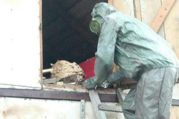 Рівненський район: рятувальники допомогли знешкодити гніздо агресивно налаштованих шершнів (ВІДЕО)