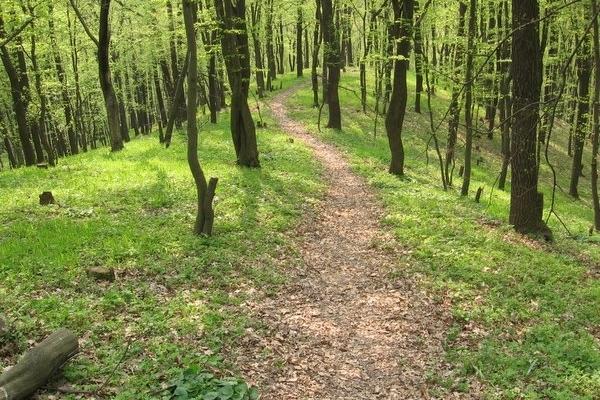 На Рівненщині шукають зниклу в лісі жінку