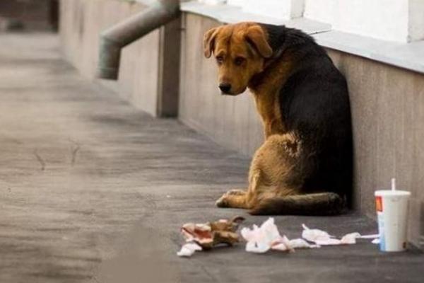 Рівненська зоозахисна організація шукає волонтерів для підрахунку собак (Відео)