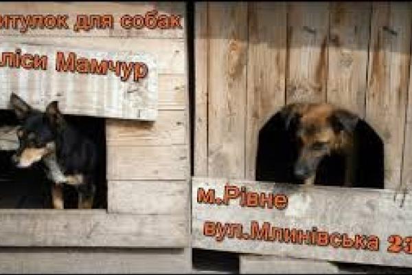 Рівненський собачий притулок просить про допомогу