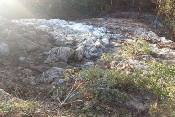 У Костопільському районі на Рівненщині вручну прибирали незахоронений скотомогильник