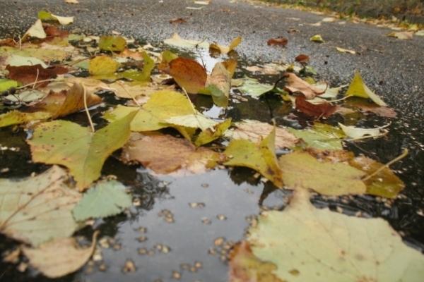 Sinoptik: Погода в Рівному та Рівненській області на п'ятницю, 6 жовтня