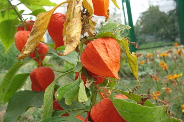 Sinoptik: Погода в Рівному та Рівненській області на вихідні, 7 і 8 жовтня