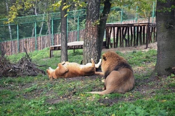 У Рівненському зоопарку навели лад після негоди і знову зустрічають відвідувачів (Фото)