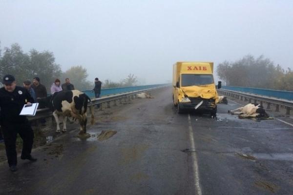 На Острожчині хлібовоз збив чотири корови. Деталі ДТП