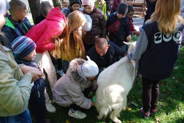Як дітлахи у Рівному вчилися доглядати за кіньми та доїти кіз (Фото)