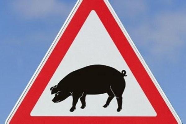 На свинофермі Дубенщини виявили африканську чуму