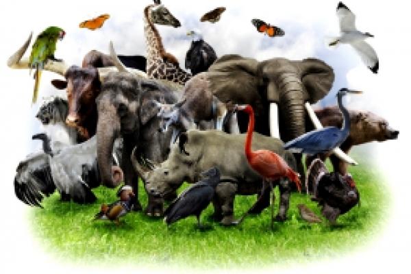Рівнян закликають приєднатися до маршу за права тварин