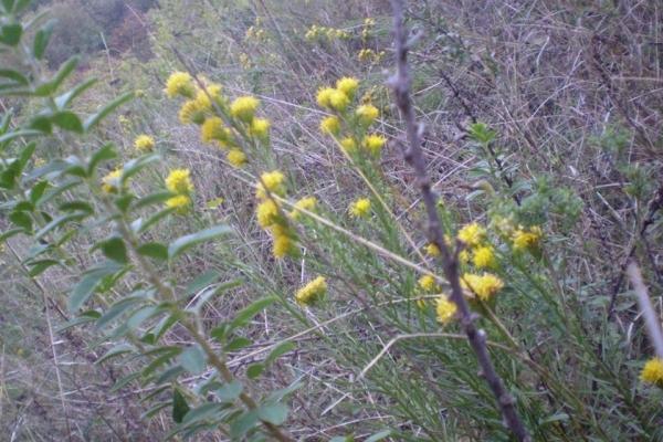 Екологи Рівненщини знайшли унікальну рослину (Фото)
