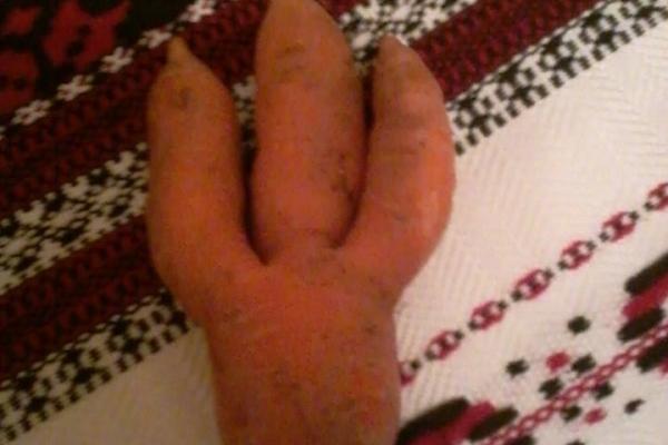 Рівненський історик поділився «патріотичною» морквою (Фото)