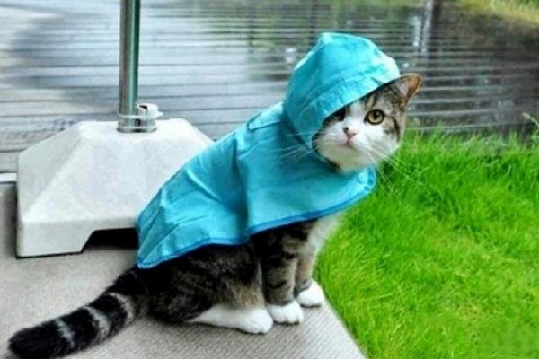 На вихідні 14 та 15 жовтня у Рівному дощитиме