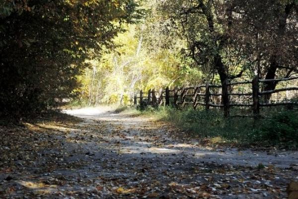 Погода у Рівному в суботу й неділю 21-22 жовтня