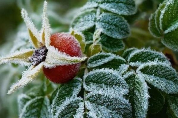 Вже з наступного тижня на Рівненщину прийдуть перші морози