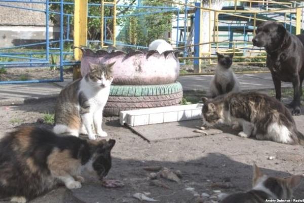 У Рівному за проблему безпритульних котів взялися волонтери (ВІДЕО)
