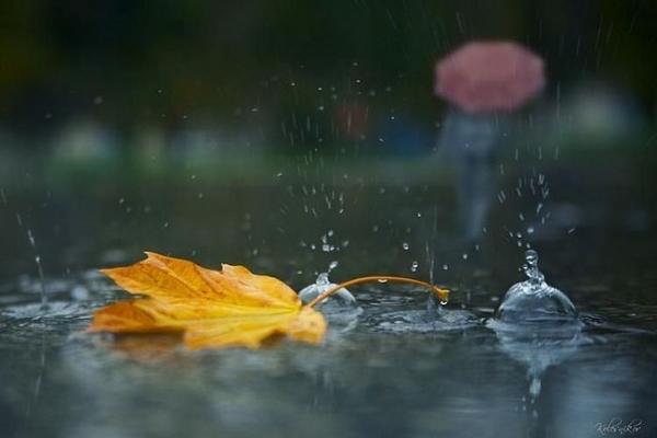 Sinoptik: Погода в Рівному та Рівненській області на п'ятницю, 27 жовтня