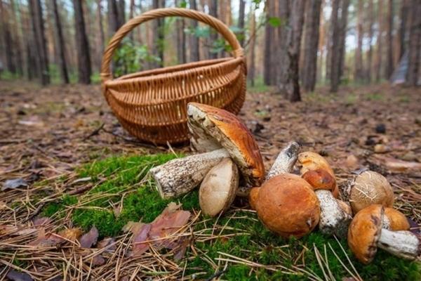 У лісі на Рівненщині знайшли жінок, які заблукали