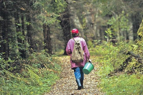 Подробиці щодо двох рівнянок, які заблукали в лісі