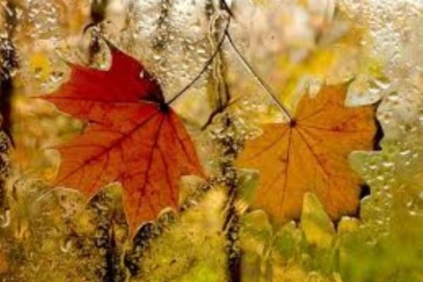 Sinoptik: Погода в Рівному та Рівненській області на вихідні, 18 і 19 листопада