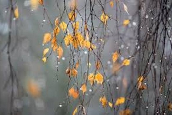 Sinoptik: Погода в Рівному та Рівненській області на середу, 22 листопада