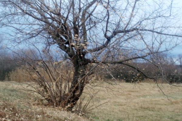 Sinoptik: Погода в Рівному та Рівненській області на четвер, 23 листопада