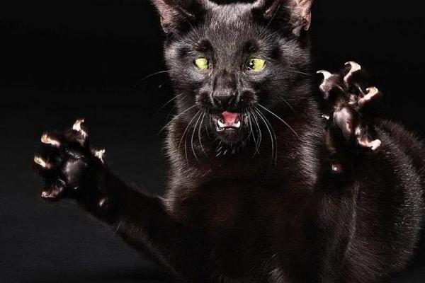 У Варковичах виявили скаженого кота, оголошено каратнин