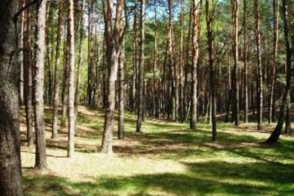 Лісівники Рівненщини проти приватизації землі у лісових масивах