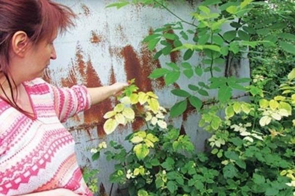 Спілка бджолярів скаржиться на рівненський агрохолдинг через пестициди