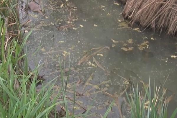 Селище на Рівненщині втратило 200 тисяч грн. через «технічні проблеми»