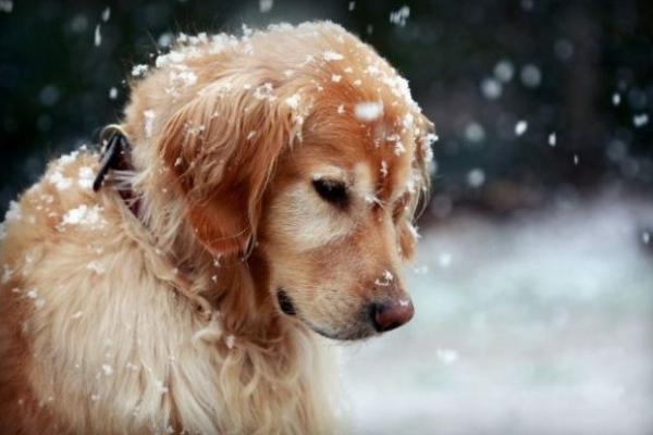 Sinoptik: Погода в Рівному та Рівненській області на п'ятницю, 15 грудня