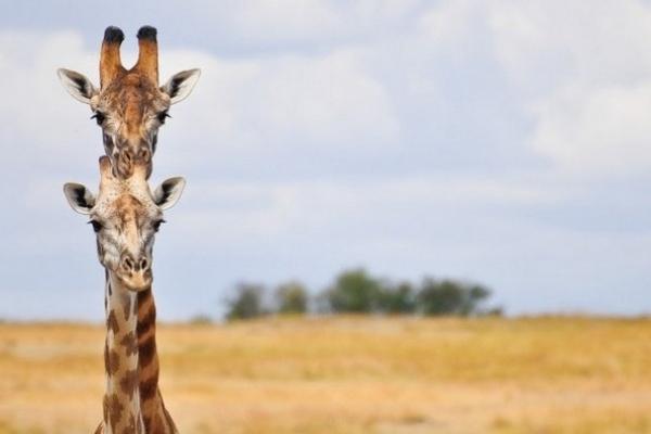 У Рівненському зоопарку хочуть утримувати нових незвичних звірів