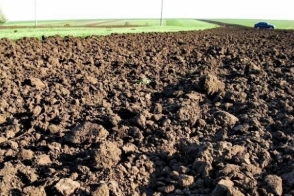 Аграрію з Радивилівщини працювати на орендованій землі не дають