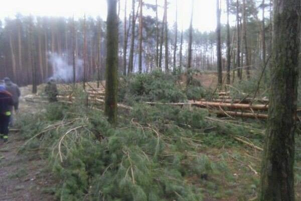 Жителів Острожчини хвилює масова вирубка лісів на території району