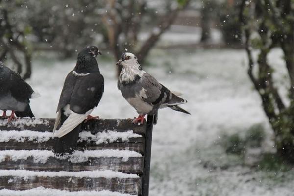 25 грудня синоптики обіцяють хмарну погоду