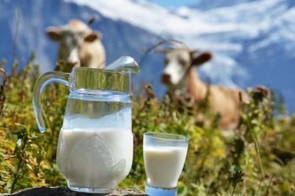 Власники «Тульчинки» та «Білої лінії» куплять молокозавод на Рівненщині