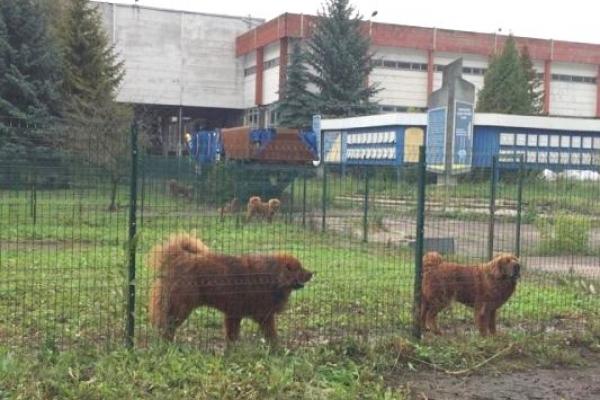 Рівненський радіозавод продадуть з аукціону інвестору