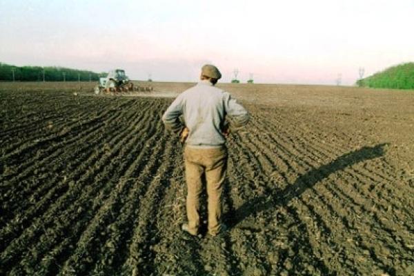 На Рівненщині селянам виплатили 380 мільйонів гривень за оренду паїв