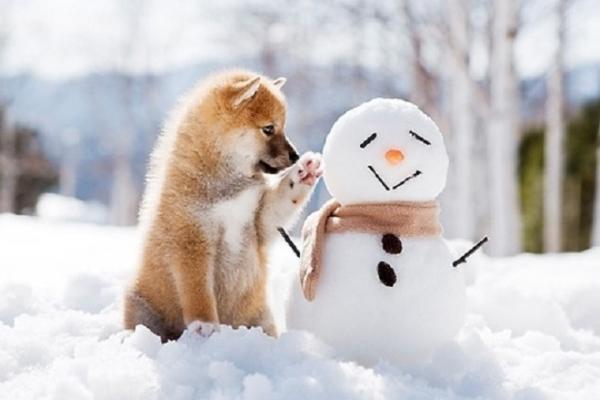З понеділка на Рівненщину прийдуть морози