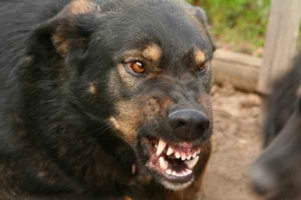 У домашнього собаки на Рівненщині виявили сказ