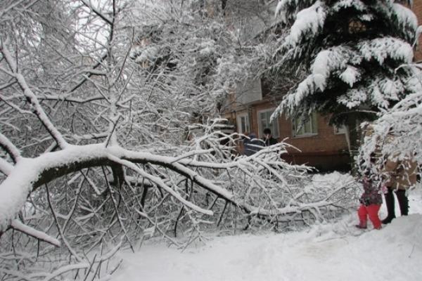У Рівному в дворах під сильним снігопадом не витримали дерева