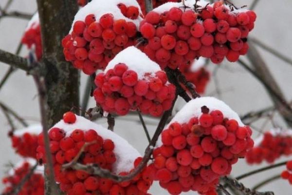 Sinoptik: Погода в Рівному та Рівненській області на середу, 21 лютого