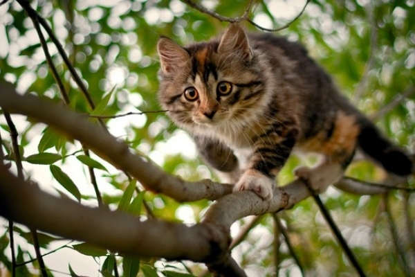 У Рівному коти житимуть по-королівськи (Відео)