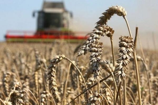 Аграрії Рівненщини сплатили до бюджету майже 20 млн грн лише за минулий місяць