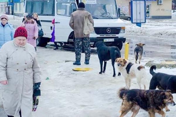 Собаку, який помер поблизу школи на Рівненщині, отруїли?