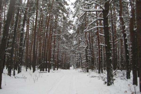 Майже 450 тисяч гривень сплатили до бюджету лісокористувачі Рівненщини