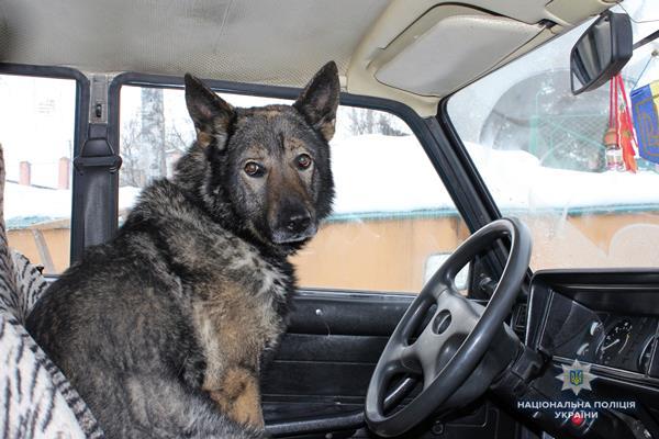 Рівнян познайомили з поліцейською вівчаркою (Фото)