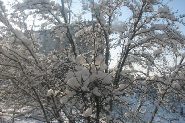Sinoptik: Погода в Рівному та Рівненській області на четвер, 22 березня