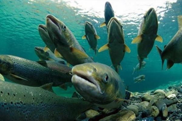 За вилов риби штрафуватимуть